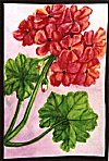 Flowers of Mysore