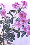 Flowers of Mysore � water color painting by Mukta Venkatesh