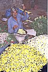 The Flower Merchant<br>A man weighing flowers on a handheld balance