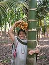The Betel Palm Tree