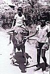 Boys taking turns to the joy ride the water buffalo