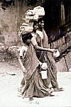 Saree is worn by young and the old alike
